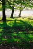 3 tree friends in the park royalty free stock photo