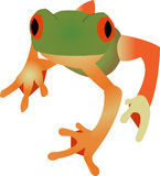 Tree frog. With orange or red eyes siting on white background Stock Image