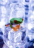 Tree frog Royalty Free Stock Image