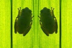 Tree-frog. Photo take the Lumix L1 digital camera and PS work Stock Photo