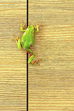 Tree frog climbing on furniture Royalty Free Stock Photos