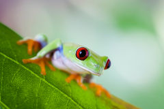 Tree frog on colorful background Stock Photo