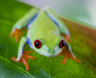 Tree frog on colorful background Stock Photography