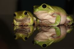 Tree frog family Stock Photo
