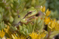 Tree Frog and Flowers Stock Image