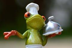 Tree Frog, Frog, Vertebrate, Amphibian royalty free stock images