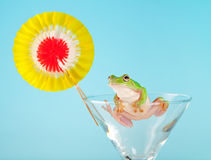 Tree frog having a party Stock Photos