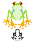 Tree Frog Royalty Free Stock Photo
