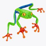 Tree Frog isolated on White Background royalty free stock photo