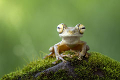 Tree frog. Lonely monitor the state Stock Photos