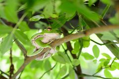 Tree Frog Selective Focal Photography Stock Photo