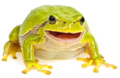 Tree frog sitting Stock Photo