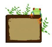 Tree frog sitting on wood background Stock Photos