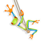 Tree frog on a swing Royalty Free Stock Photos