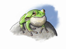 Tree Frog vocal pouche Stock Photography