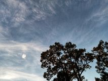 The tree in fron of the sky. The tree in fron of the gray sky royalty free stock photos