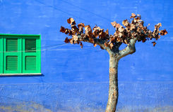 Tree in front of a blue house with green window Stock Images