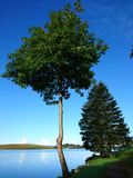 Tree in front of blue water and blue sky. Trees in front of the blue water of a lake and blue sky stock photos