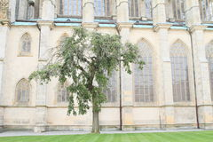 Tree in front of Cathedral of St. Barbara Royalty Free Stock Photos
