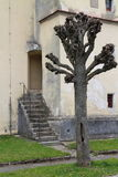 Tree in front of chruch/ kostel sv. Bartoloměje in Kunžak village near Jindřichuv Hradec. Czech republic Royalty Free Stock Photo