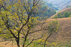 Tree in front of hills covered with dry yellow grass at sunny autumn afternoon Royalty Free Stock Images