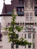 Tree in front of historic building in Ottawa, Canada. royalty free stock photo