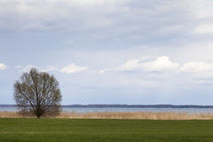 Tree in front of lake 2. Tree in springtime with green lawn in front of lake Müritz (Germany Stock Image