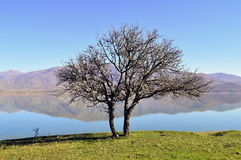 Tree in front of a lake. Tree with bare branches in front of the small Prespes lake in Greece Royalty Free Stock Image