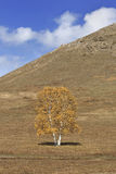Tree in front of a mountain, Inner Mongolia, China Stock Photos