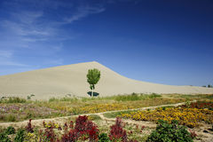 Tree in front of sand dunes Stock Photo