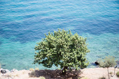 Tree in front of sea Stock Image