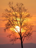 Tree in front of setting sun Royalty Free Stock Photo