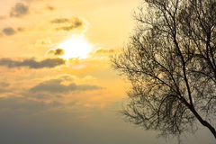 Tree in front of sunset sky. The sun between clouds. Royalty Free Stock Image