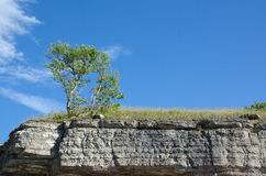 Tree at the frontline of a limestone cliff Royalty Free Stock Photography