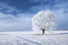 Tree in frost Royalty Free Stock Image
