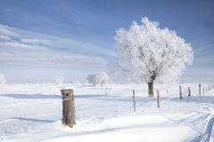 Tree in frost Stock Photos