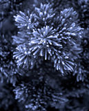 Tree Frost Royalty Free Stock Photos
