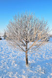 Tree in frost at dawn Stock Photography
