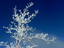 Tree with frost. On a foggy day royalty free stock photos