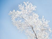 Tree with frost Royalty Free Stock Photography