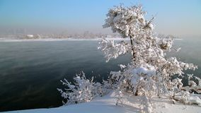 The tree in frost on the river. Angara river in Irkutsk city in winter, houses and trees in the snow stock footage