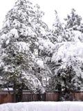Tree frost Stock Photo