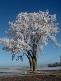 Tree frosted by the frost Royalty Free Stock Photography