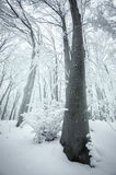 Tree in frozen forest with snow Royalty Free Stock Images