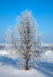 Tree in frozen ice Royalty Free Stock Image