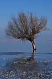 Tree in frozen lake Royalty Free Stock Photos