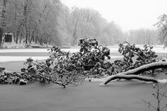 Tree in frozen lake Stock Photos