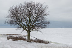 Tree by the frozen sea Stock Photos