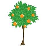 Tree with fruit Stock Photo