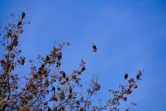 Tree full of birds Stock Photos